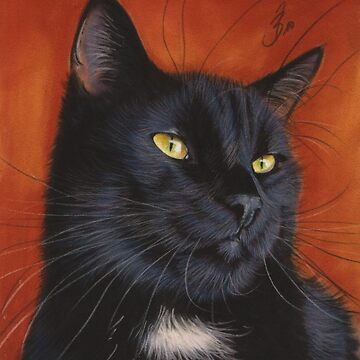 black cat kitten  by art-of-dreams