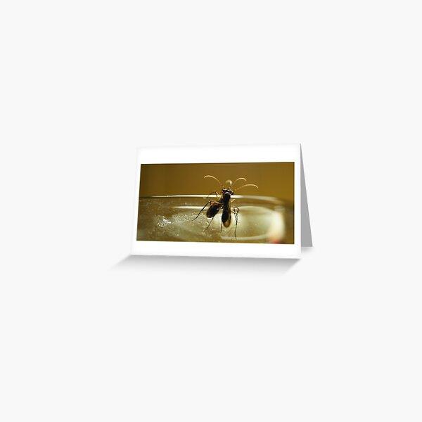 Braconid Wasps Greeting Card