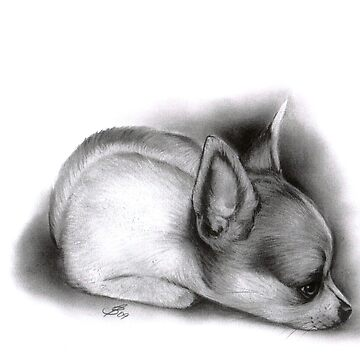 Chihuahua Puppy by art-of-dreams