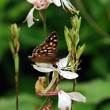 Butterfly by 123alice1989