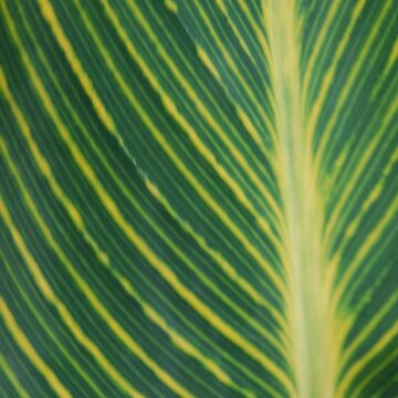 Green leaf by 123alice1989