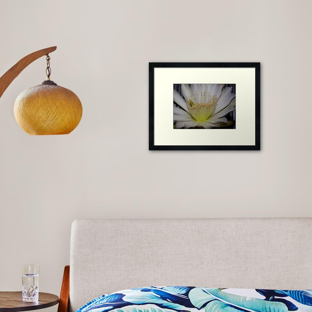 Cactus flower up close Framed Art Print