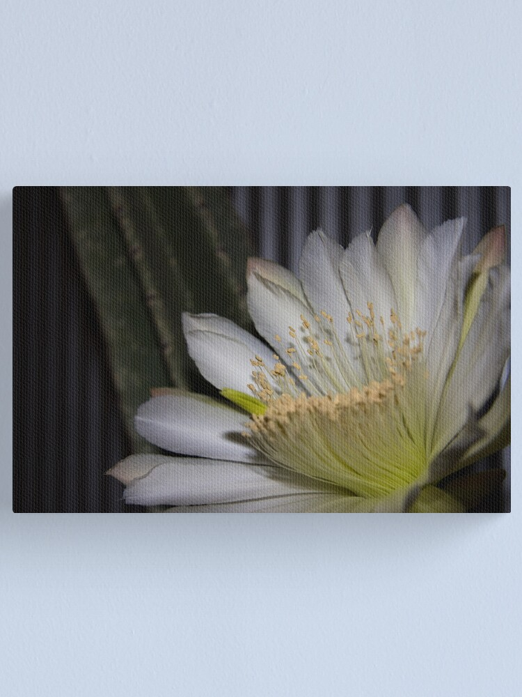 Alternate view of Cactus flower Canvas Print