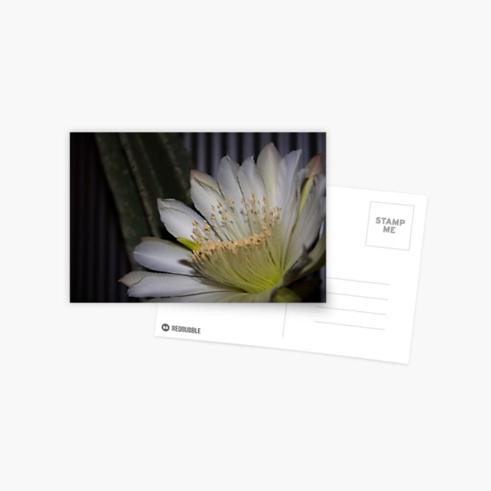 Cactus flower Postcard