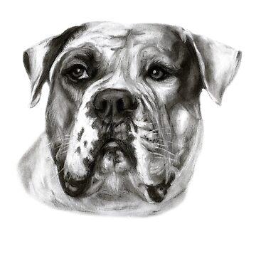 American Bulldog by Danguole