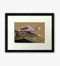 Smilling crocodile Framed Print