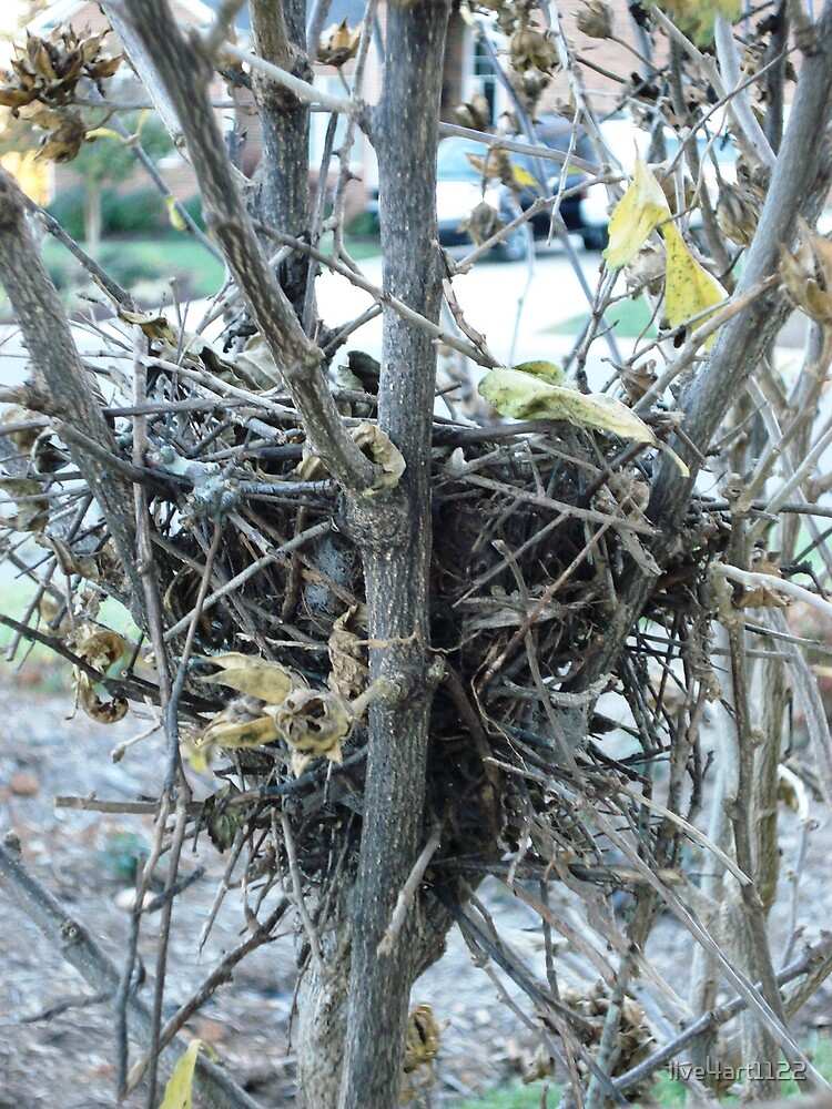 Nesting Ground by live4art1122