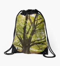 www.davidbrewsterphotography.com – Golden Elm, Punt Road, South Yarra (planted 1938) Drawstring Bag