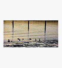 Sunrise Ducks Photographic Print
