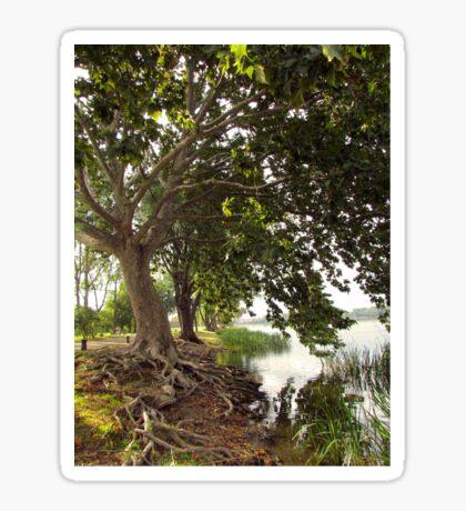 Lake Trees Sticker