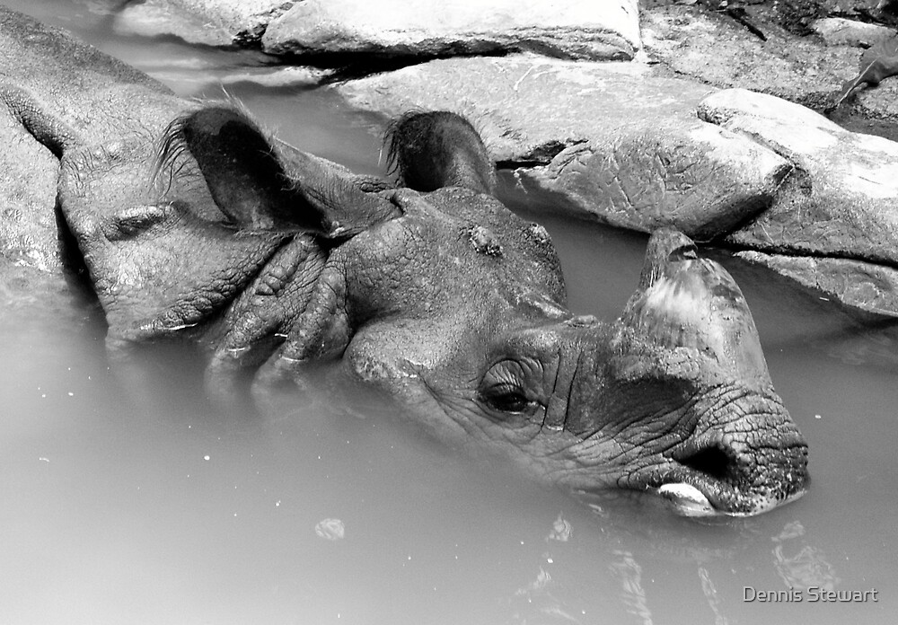 Indian Rhino (Black & WHite) by Dennis Stewart
