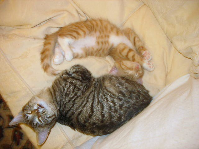 Sally and Angelo,streching. by Tramper