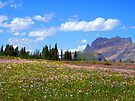 Glacier Wildflowers 8 by Tamara Valjean