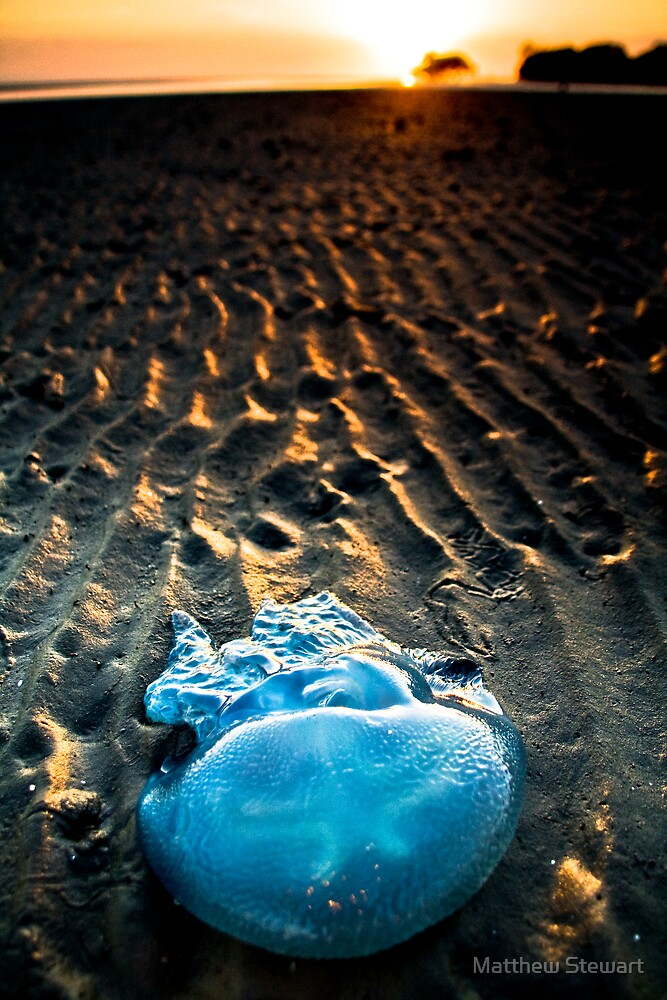 Jelly Star (Nudgee Beach, Queensland) by Matthew Stewart