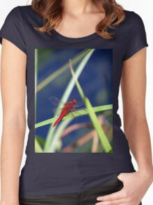Dragonfly 1 Women's Fitted Scoop T-Shirt