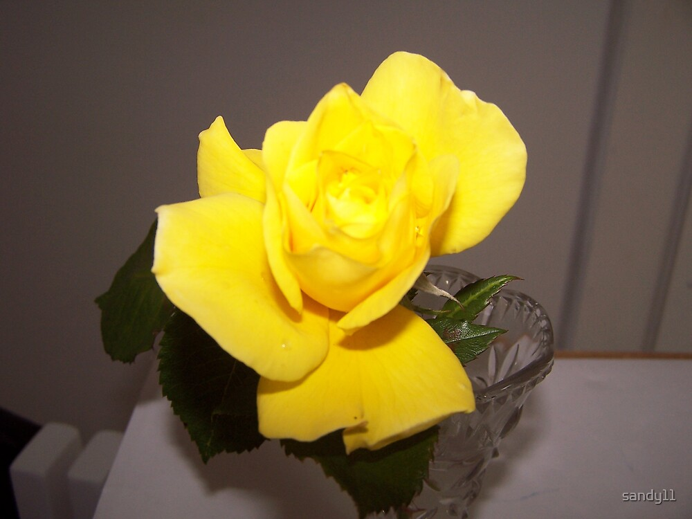 yellow rose by sandy11