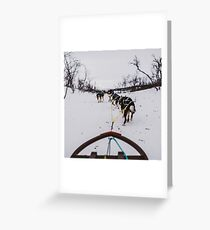 Tromso dog sledging Greeting Card