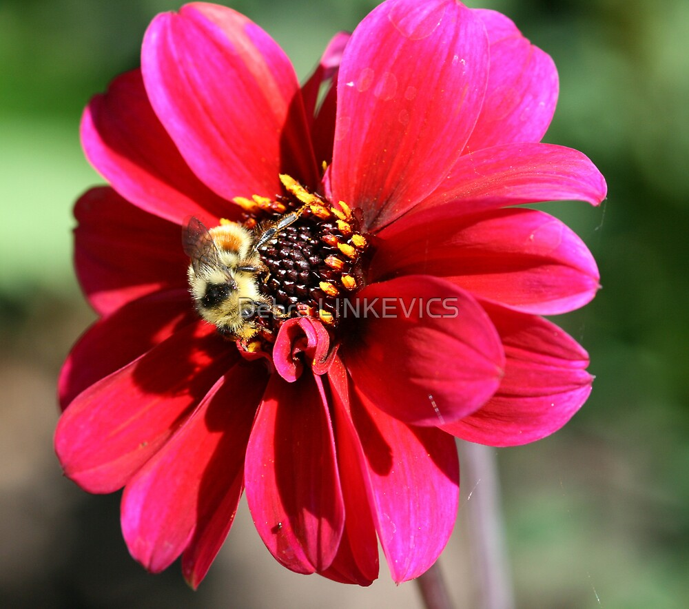 Beautiful Bee by Debra LINKEVICS
