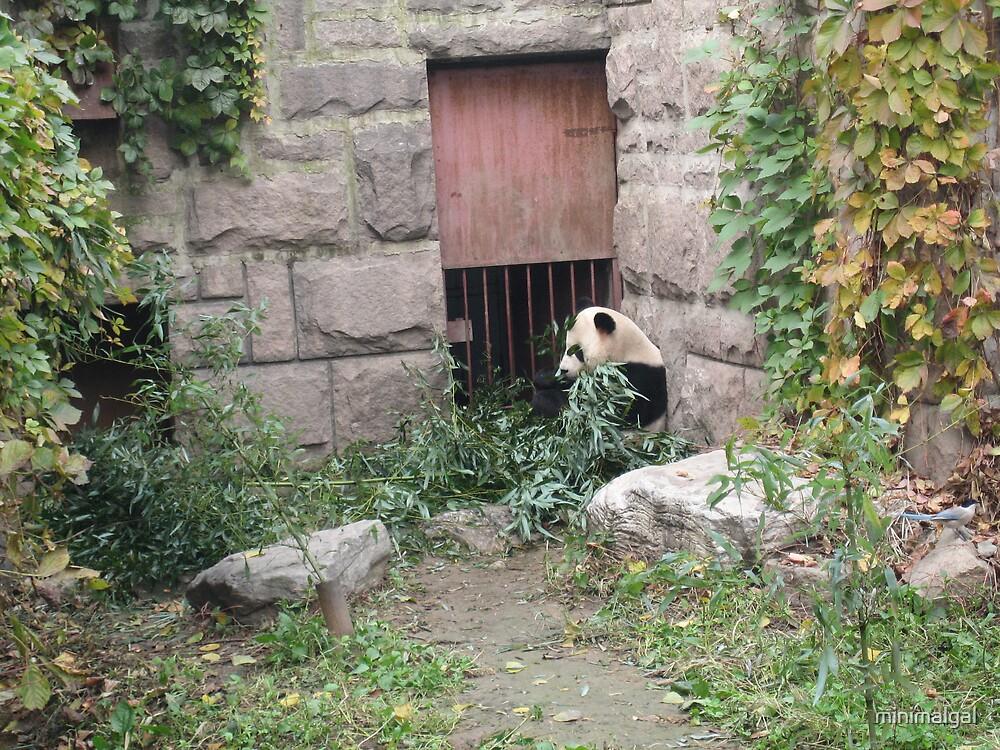 Pensive Panda  by minimalgal