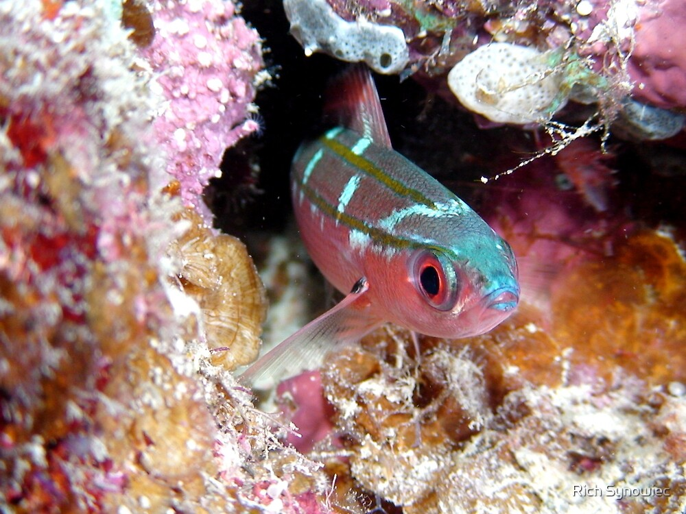 Fish on the Great Barrier Reef by Rich Synowiec