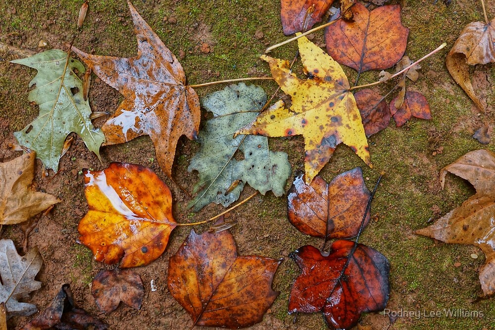 When November Comes 3 by Rodney Williams