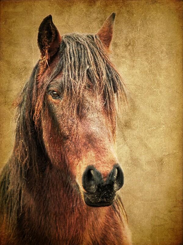 Rabid Horse Artwork Home Facebook - 600×800