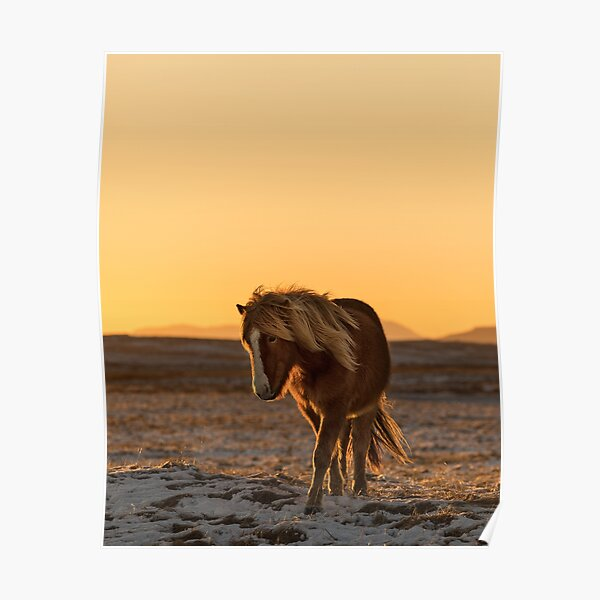 Horses Eat A Grass On A Summer Pasture Art Print Home Decor Wall Art Poster