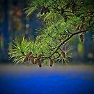 Pine cones Over the River by TJ Baccari Photography