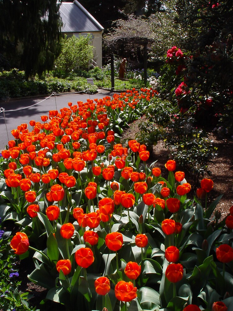 photoj Tas-Hobart Botanical Gardens by photoj