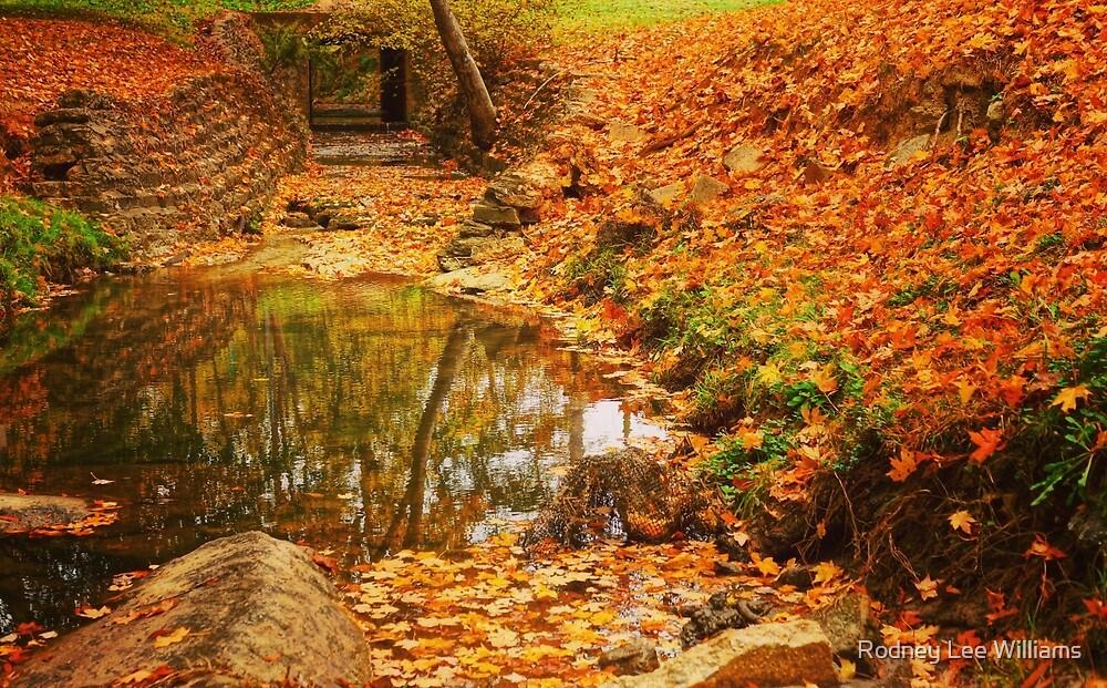 Lineberger Park 6 by Rodney Williams