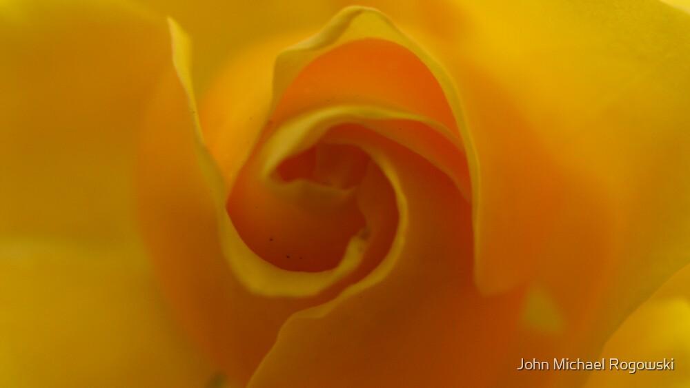 yellow rose by John Michael Rogowski