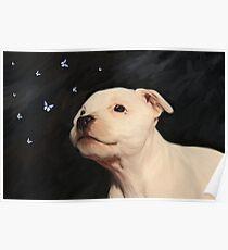 Staffy puppy!! Poster