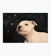 Staffy puppy!! Photographic Print