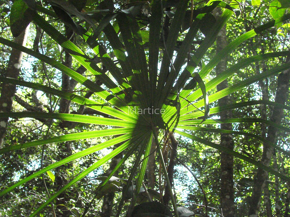 Pretty Palm by Martice