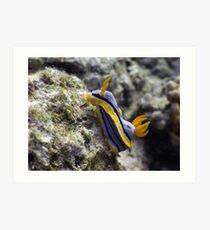 Nudibranch, Bali, Indonesia Art Print