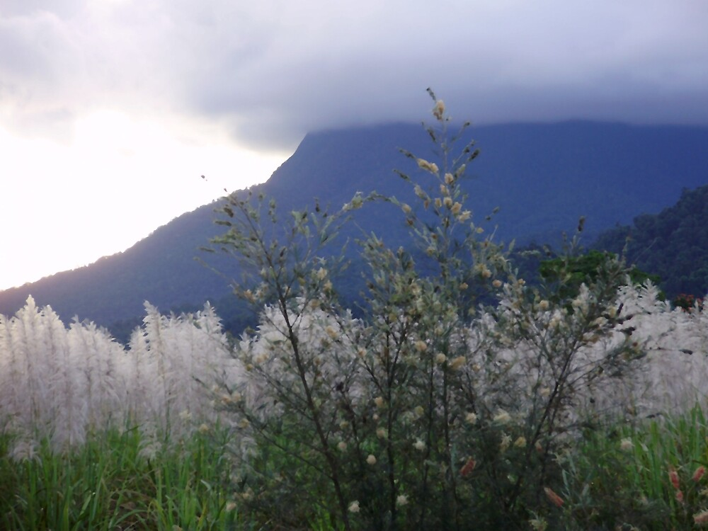 Foggy Mountain in Queensland by Wynn