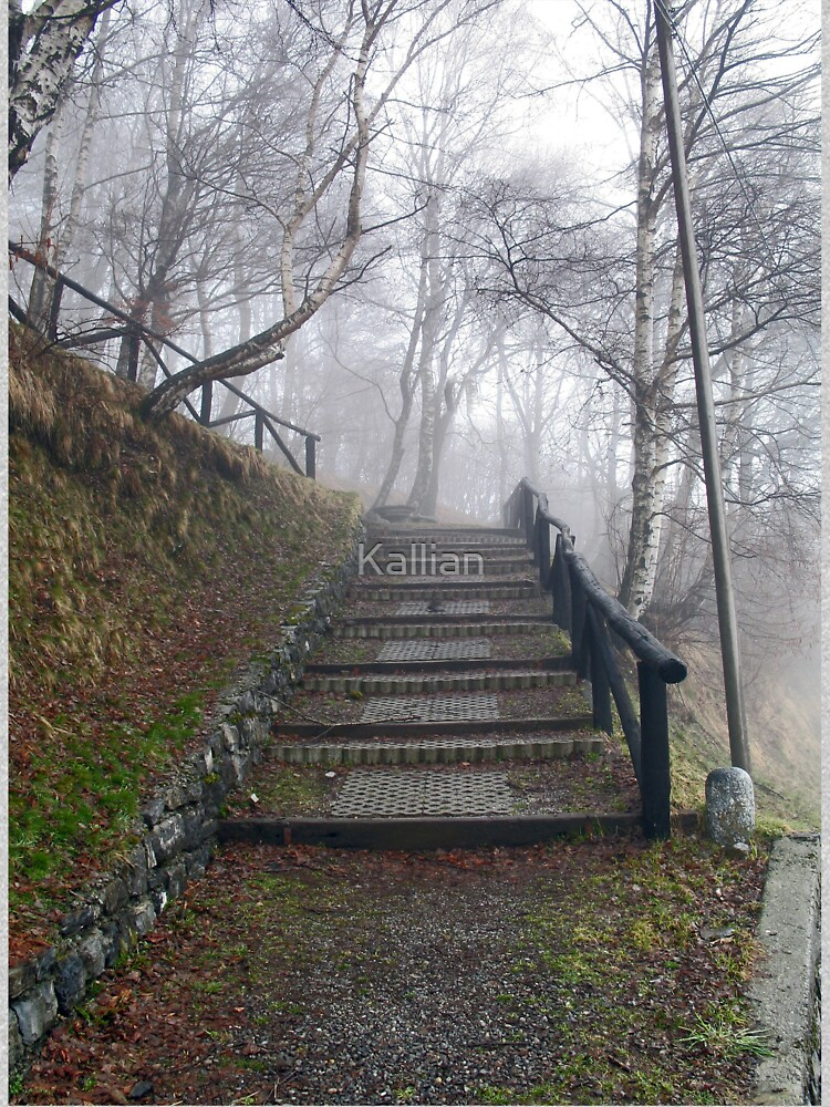 Forest stairs by Kallian