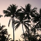 Palm Paradise by tracyleephoto