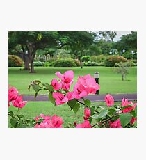 Emancipation Park, Jamaica Photographic Print