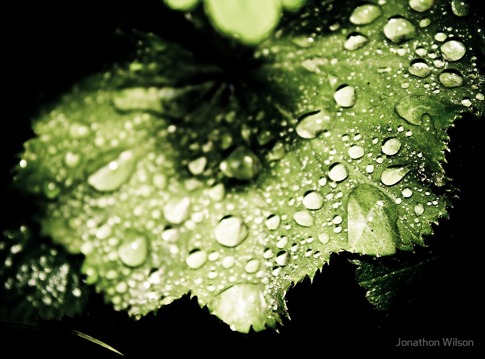 Water water everywhere by Jonathon Wilson