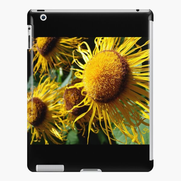 Sunflowers in Bloom - Shee Nature Photography iPad Snap Case