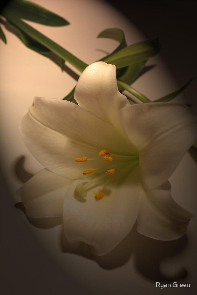 Lilly............. by Ryan Green
