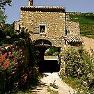 Provence by mindfulmimi