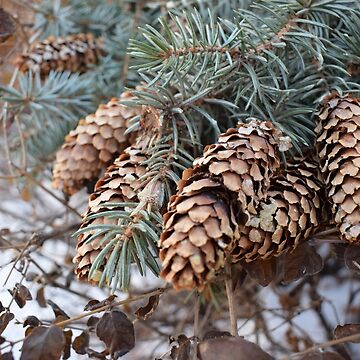 Pinecone by linsbot