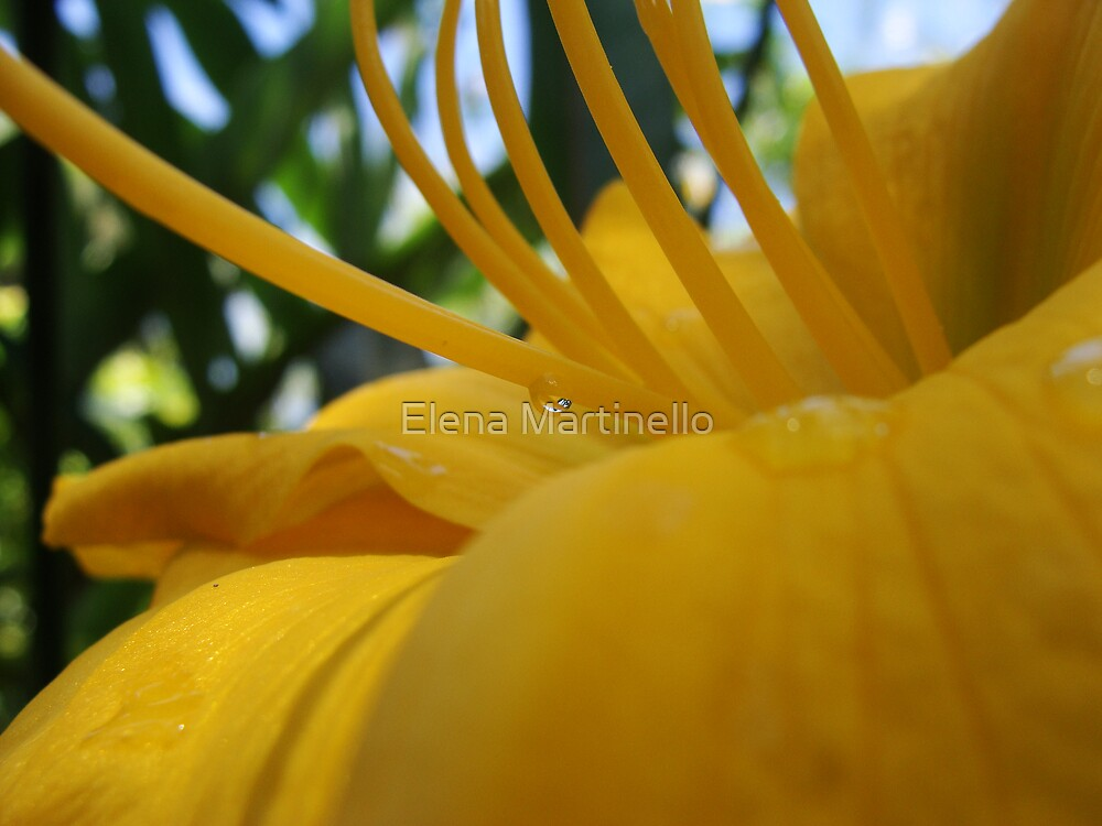 Yellow Hibiscus by Elena Martinello