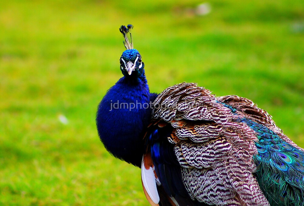 Sitting Proud.... by jdmphotography