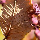 leaf by bobjaret