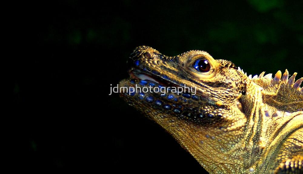 Iguana type lizard....... by jdmphotography