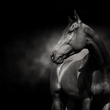 The Thoroughbred  by FastTrackPhotog