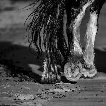 The Clydesdale by FastTrackPhotog